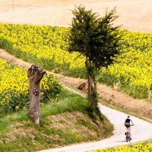 gravel-bike-header